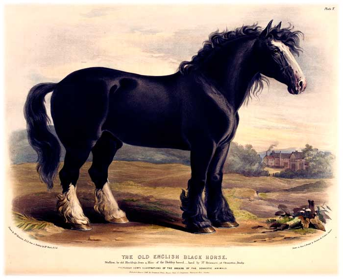 Old English Black Horse